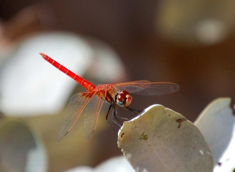 Dragon fly in Wadi Al Shab