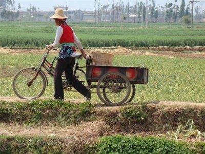 fiets in het veld
