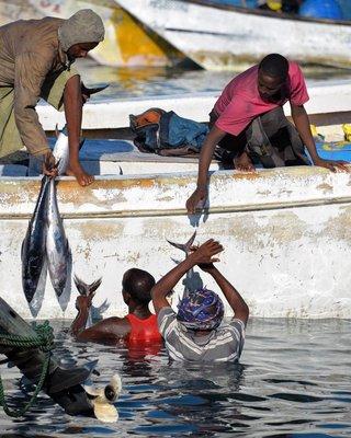 Bosaso Fish Market