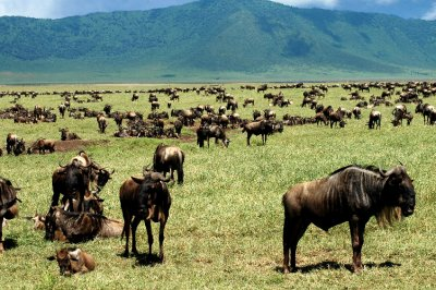 herd at nogorgoro crater