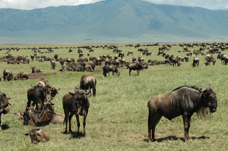 Nongorogor crater herd