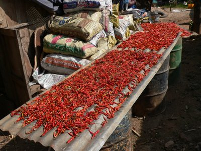 Drying Chilis 1