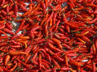 Drying Chilis 2