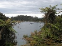 Scene from Stewart Island