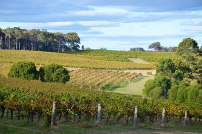 Margaret River Vineyard, Western Australia