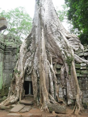 Ta Prohm Temple - Where's Lara Croft?