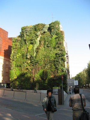 Vertical garden by Patrick Blanc, CaixaForum
