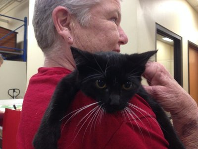 Monica holding Rebecca's new kitty!