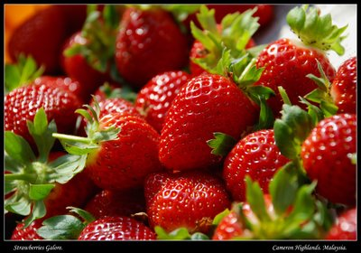 Strawberries Galore