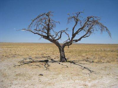 Etosha Tree [1024x768]