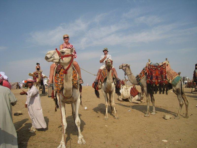 large_Giza_Camel..80x768_.jpg
