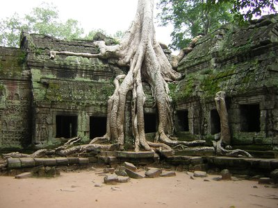 Ta Prohm, Angkor
