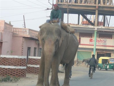 RPW - Elephant in Agra