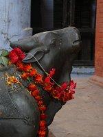 Sacred Cow - Varanasi