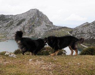 Asturias_2_145.jpg