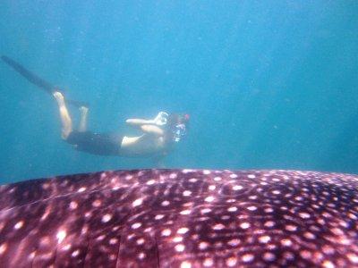 Whaleshark! (Butanding)