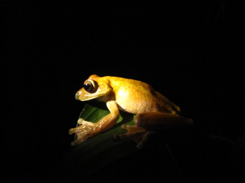 Frosch im Ranarium