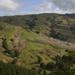 auckland hillside