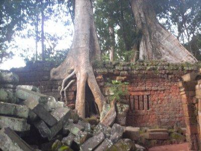 Angkor_TaP..allTree.jpg