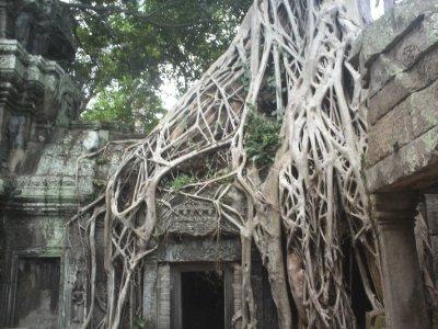 Angkor_TaP..reeDoor.jpg