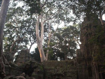 Angkor_TaProhmMiddle.jpg