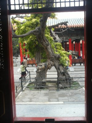 Beijing_Fo..ityTree.jpg