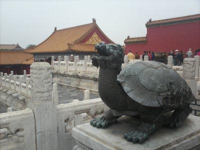 Beijing_Fo..yTurtle.jpg