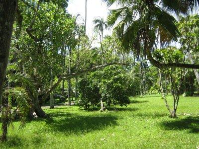 BotanicGarden1.jpg