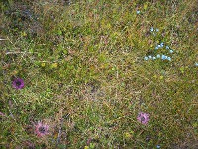 Gzonchen_Flowers.jpg