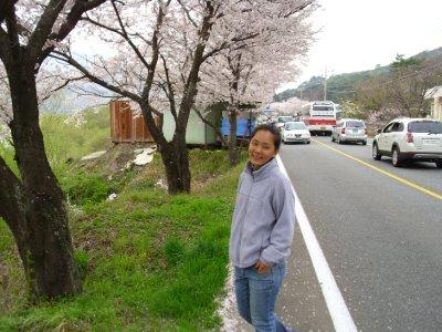 Jinju_Bomi..lossoms.jpg