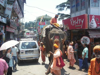 McLeod_Elephant.jpg