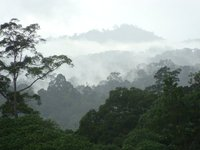 danum valley - heaven