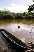 Amazonian Fixer-Upper