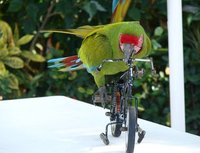 Fight global warming, ride a bike