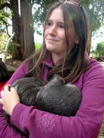 Adorable baby wombat!