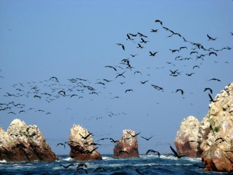 Onwaarschijnlijk veel vogels op de Islas Ballestas