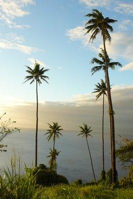 15. Palms