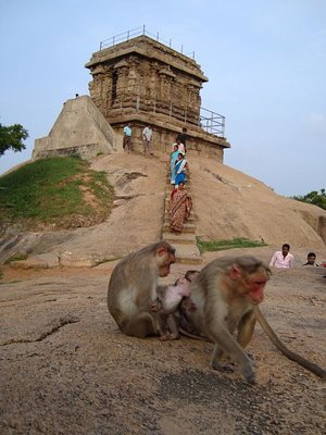 temple_monkey.jpg