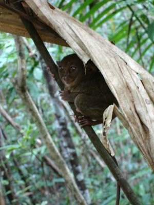 tre_monkey.jpg