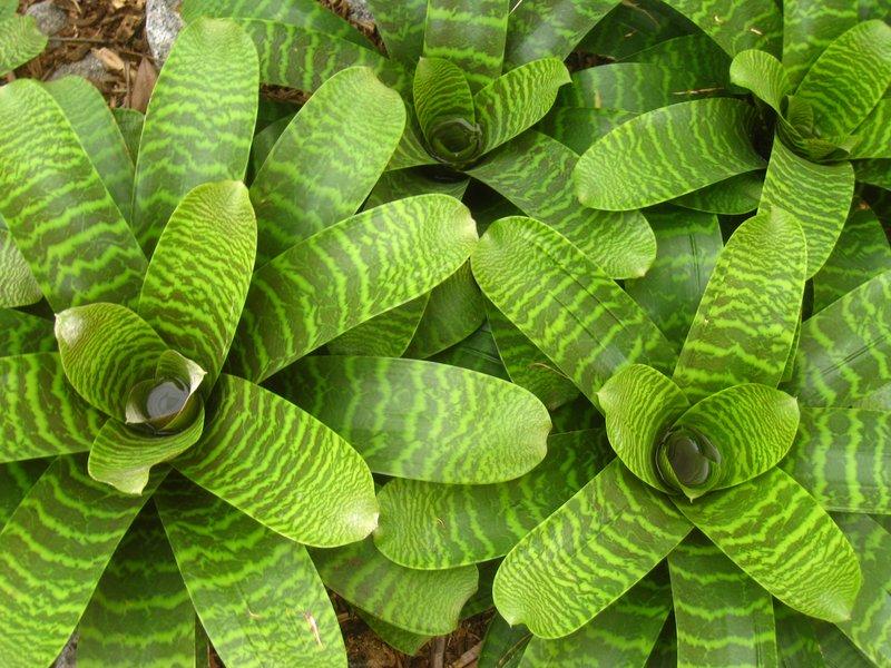 Bromeliads