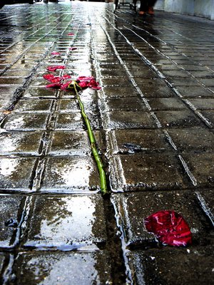 Broken Rose, Barcelona