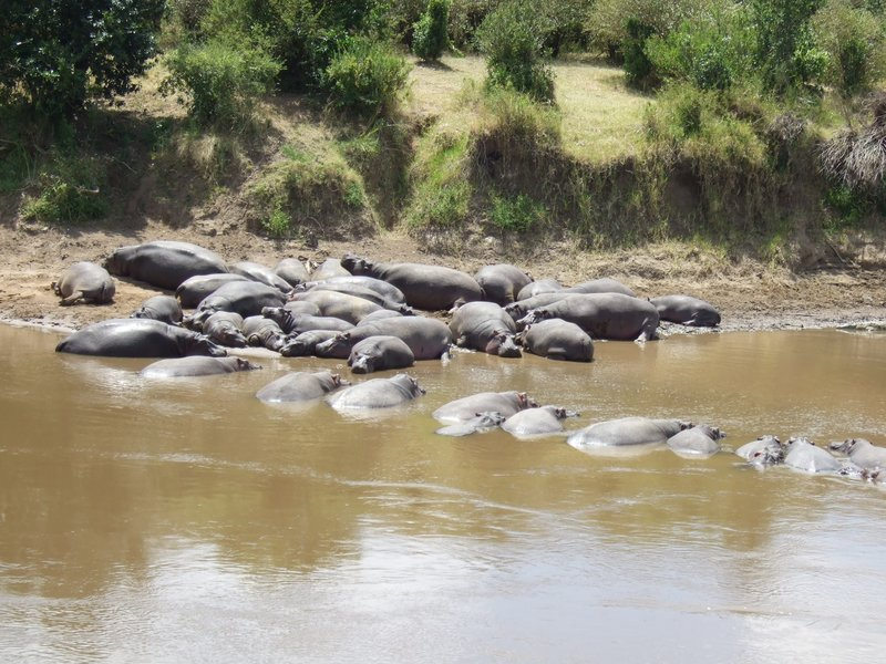 Lazy hippos