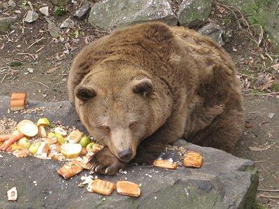 Bear in moat at Krumlov Castle