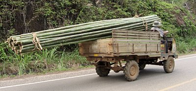 Transporting a load of bamboo, Sop Ruak
