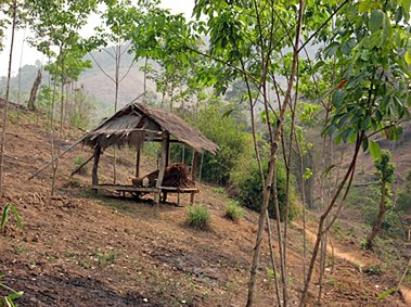 Farmers shelter, Chiang Rai