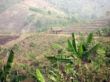 Hilltop plantation, Chaing Rai