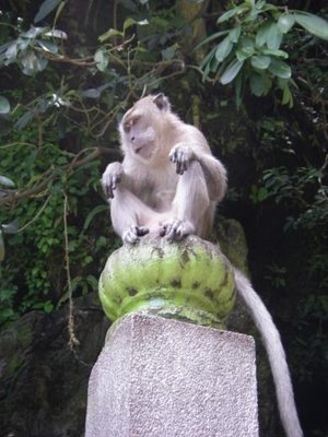 monkey_in_kl.jpg
