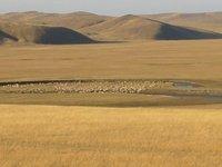 Grasslands with animals