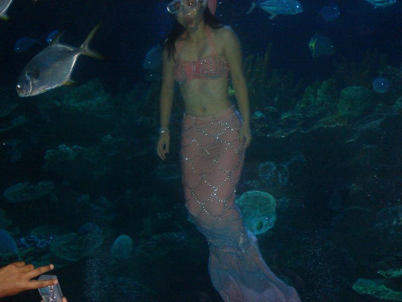 Siren in my Swimming Pool