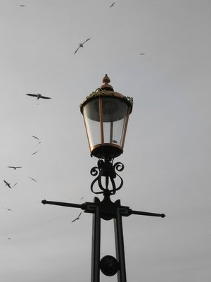 Lantern with seagulls